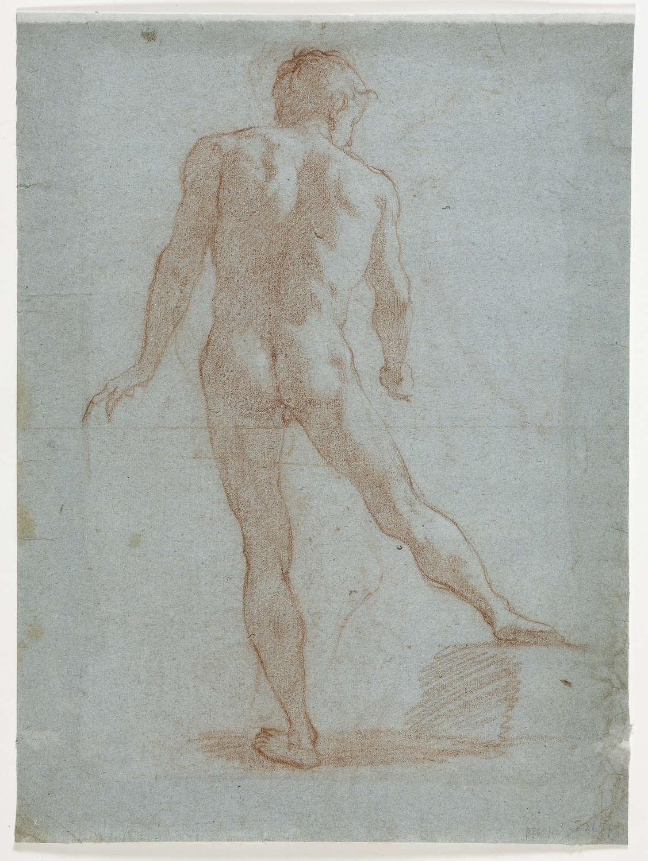 Volteranno drawing